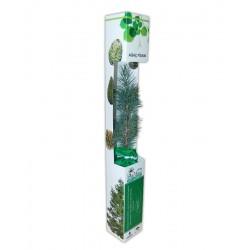 PFKK01 Karton Kutu Canlı Ağaç Fidanı